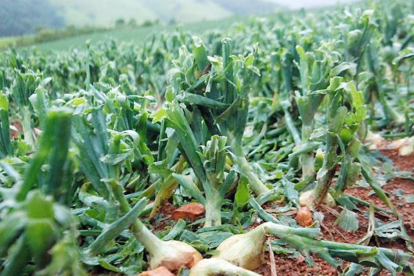 clima-agronegocio