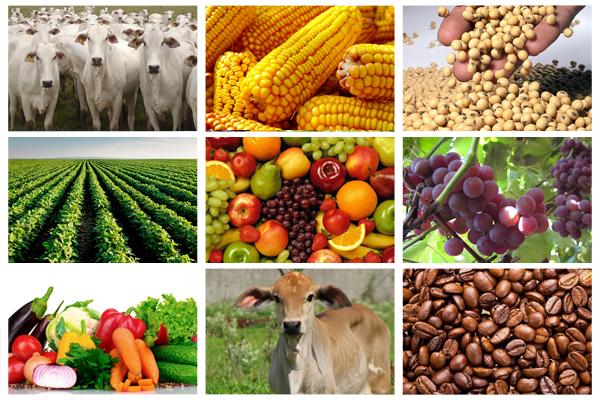 Agropecuária puxa economia brasileira, revela PIB