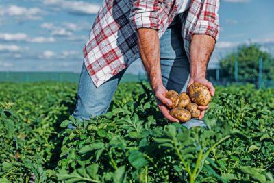 6 dicas para evitar perdas na produção agrícola