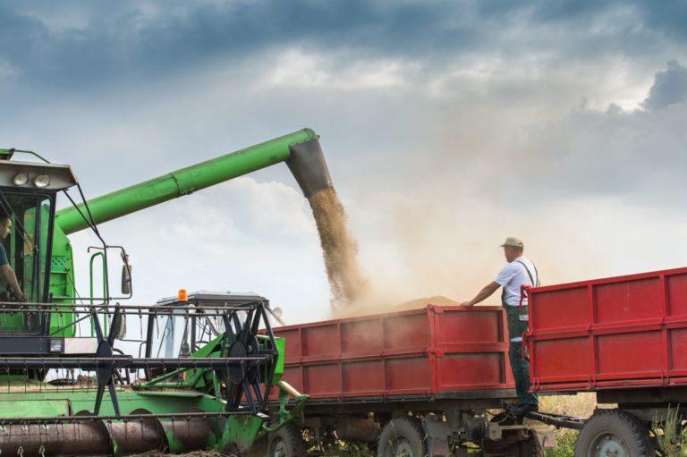 Saiba agora mesmo como garantir a segurança na produção de soja