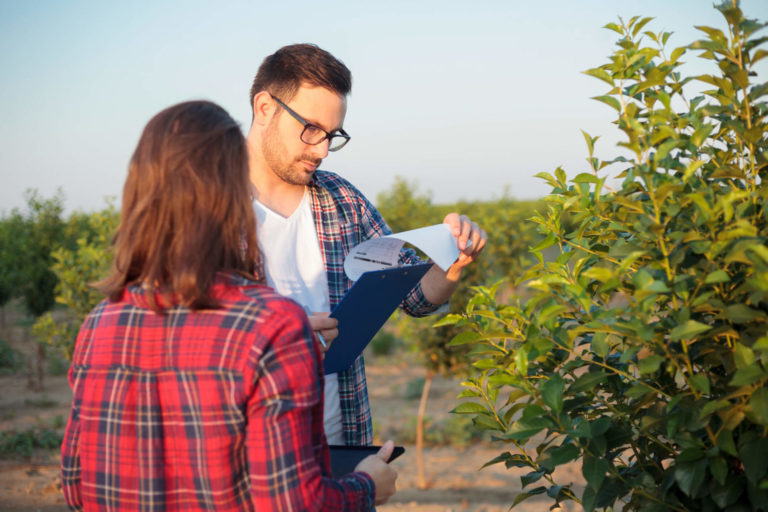 Entenda a importância de uma consultoria para seguro agrícola