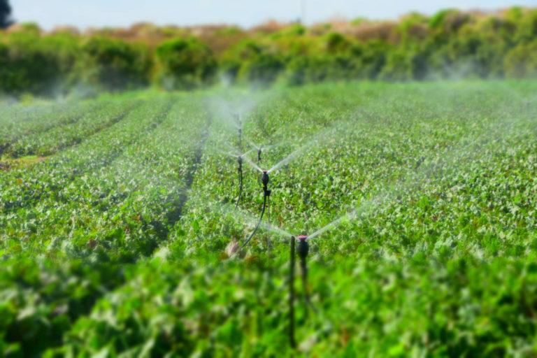 Como contornar o período de seca na agricultura e pecuária