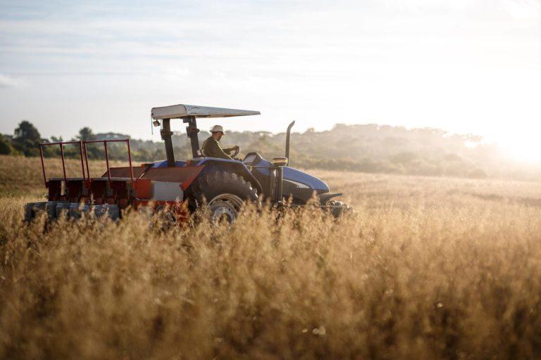 Entenda o seguro de penhor rural e por que ele é importante