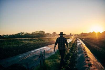 Seguro agrícola no Brasil: o que você precisa saber