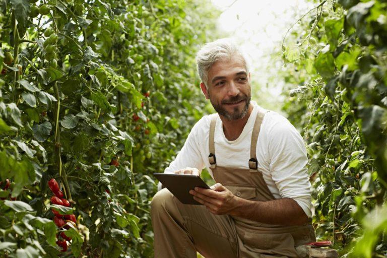 Você sabe quais os diferentes tipos de seguro para agronegócio? Aprenda agora!