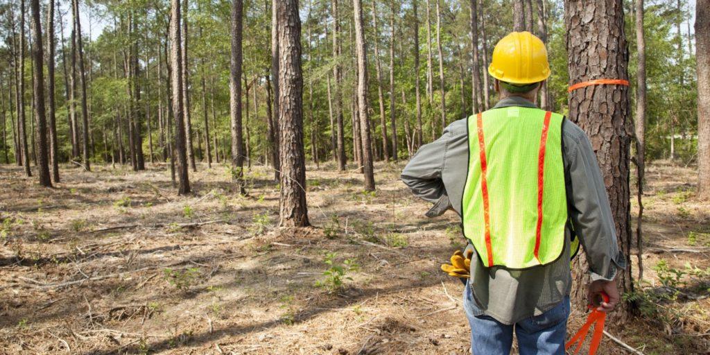 o que é silvicultura