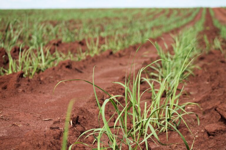 ZARC: Conheça mais sobre o Programa Nacional de Zoneamento Agrícola de Risco Climático